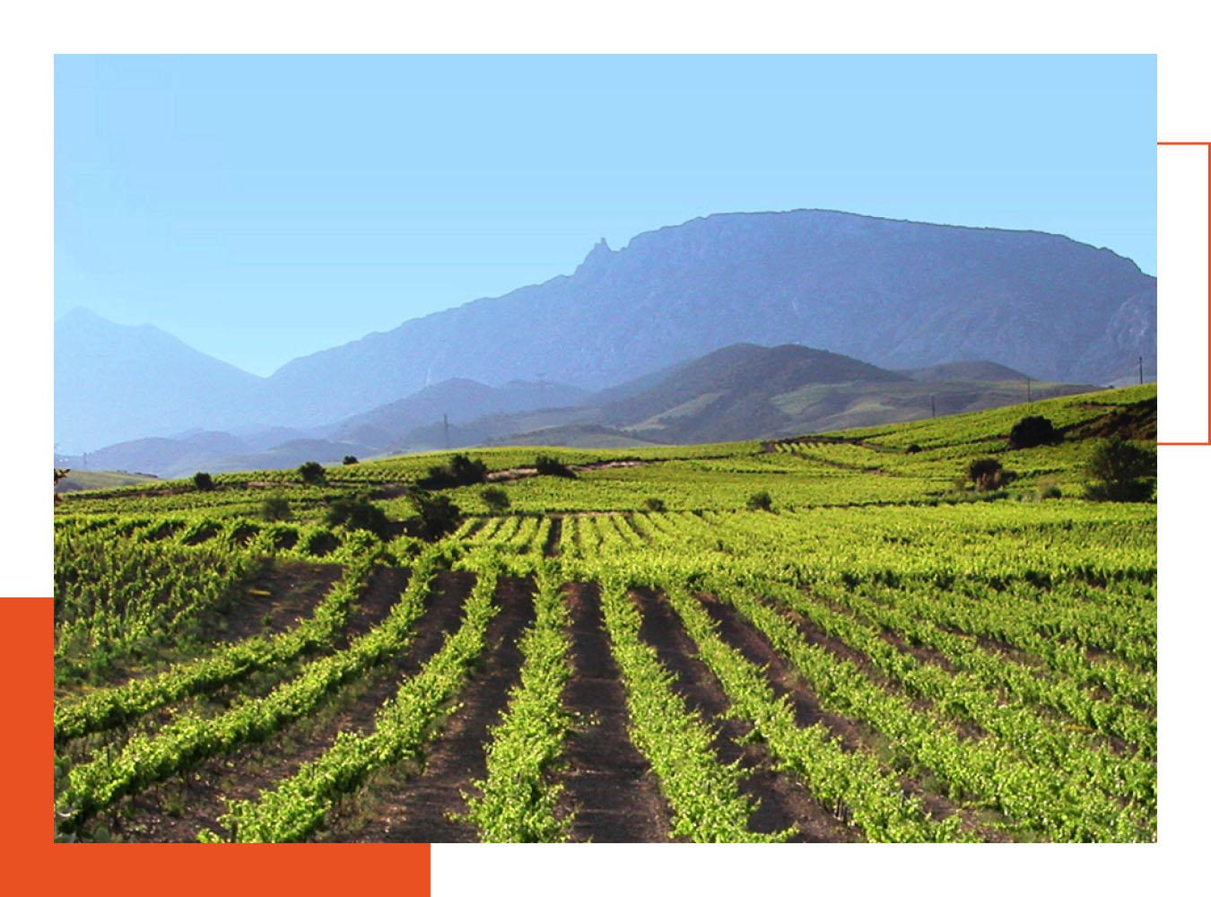 Les vins du terroir du Roussillon (Fenoullèdes par exemple) sont à l'honneur à la carte de L'Almandin
