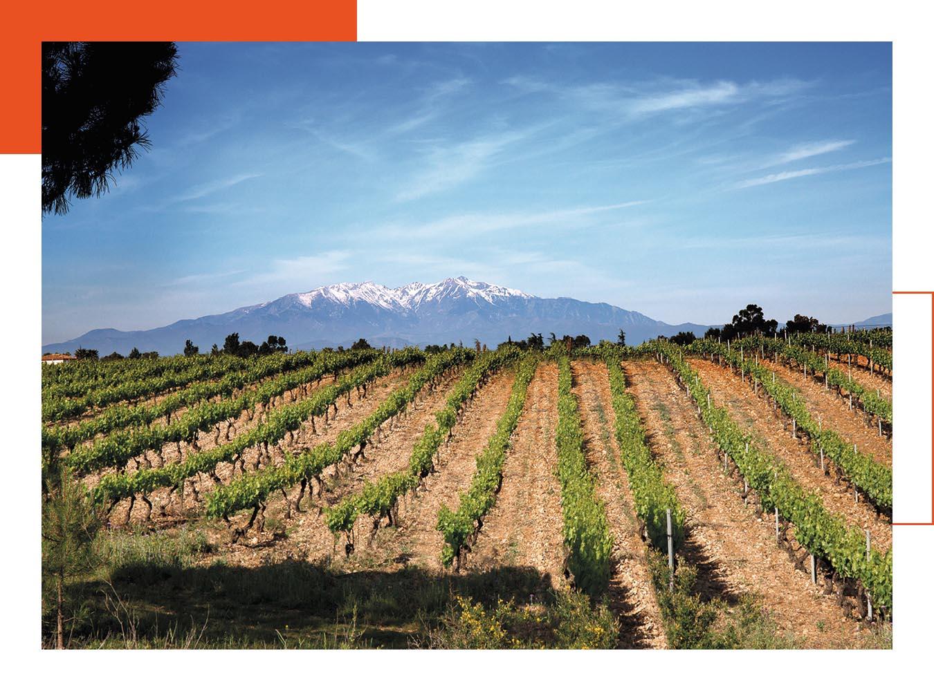 Les vins du terroir du Roussillon sont à l'honneur à L'Almandin